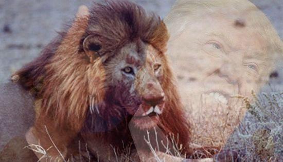 lion_carnivore2